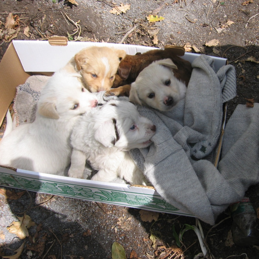cuccioli-di-cani-feriti-e-denutriti-sequestrato-allevamento-gjebs