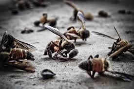 Insetti verso estinzione, natura rischia collasso